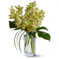 Orquídeas Cymbidium, Uruguay