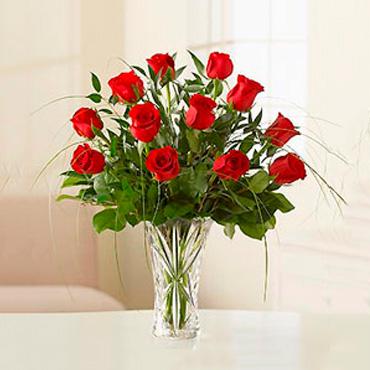 Amazing Roses - TACUAREMBO