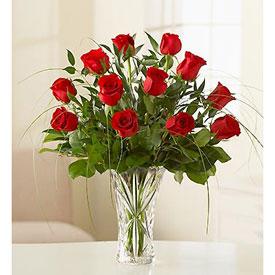 Amazing Roses - Flores en  SAN JOSE